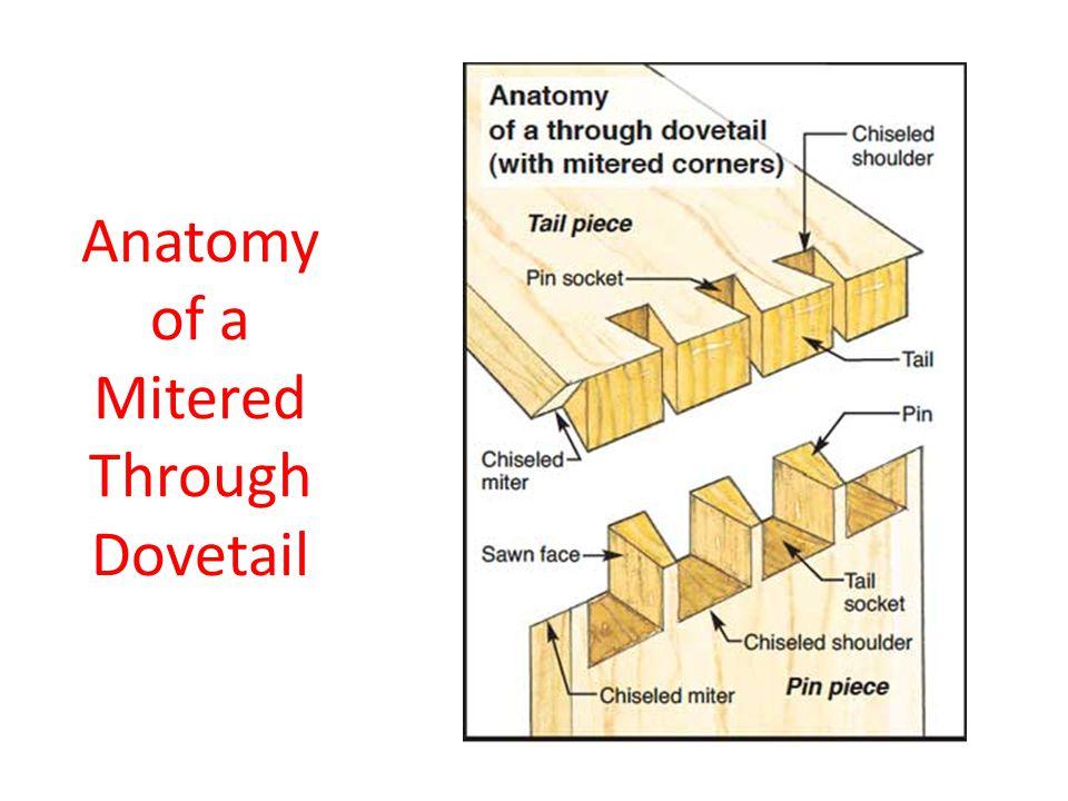 Anatomy of a Mitered Through Dovetail