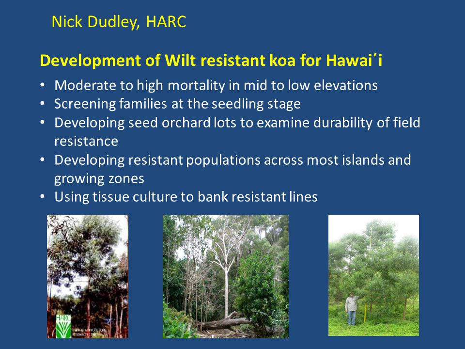 Nick Dudley, HARC Development of Wilt resistant koa for Hawai΄i Moderate to high mortality in mid to low elevations Screening families at the seedling
