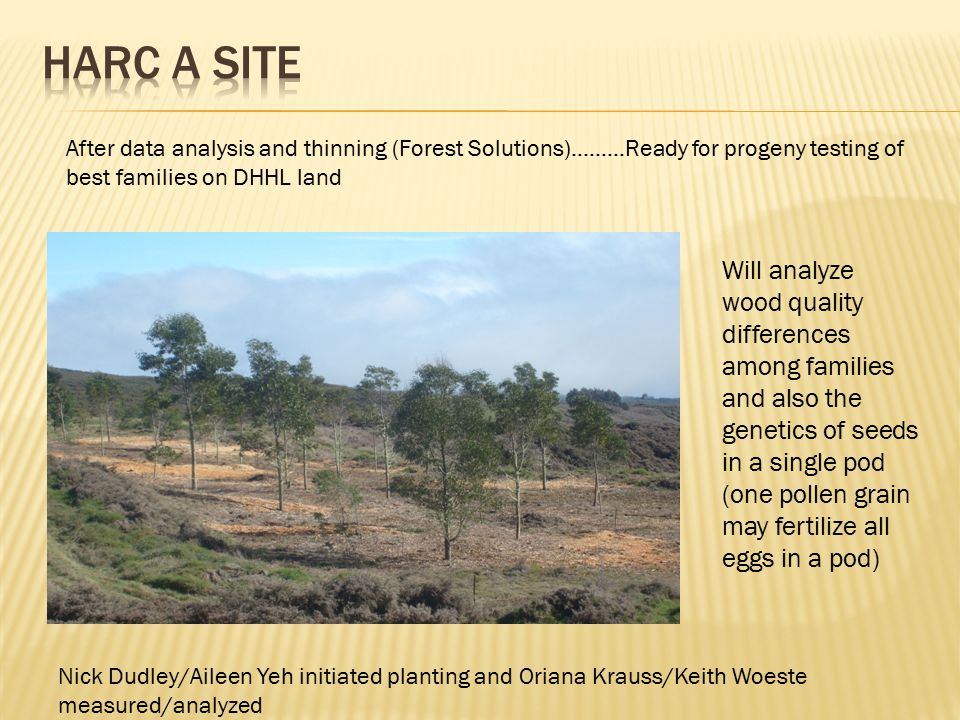 After data analysis and thinning (Forest Solutions)………Ready for progeny testing of best families on DHHL land Nick Dudley/Aileen Yeh initiated plantin