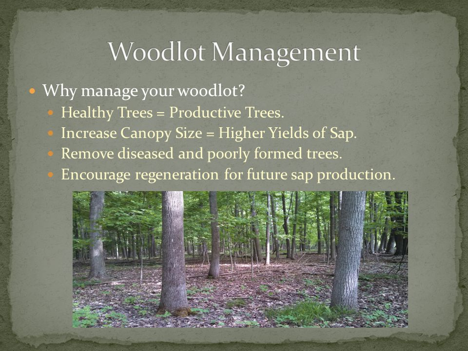 Why manage your woodlot. Healthy Trees = Productive Trees.