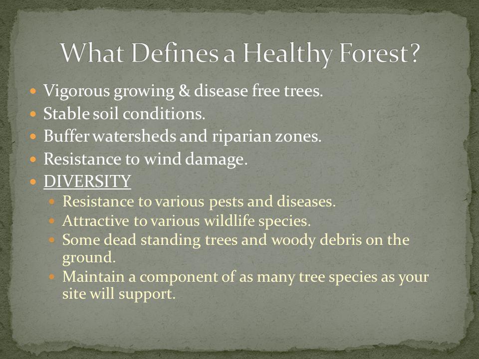 Vigorous growing & disease free trees. Stable soil conditions.