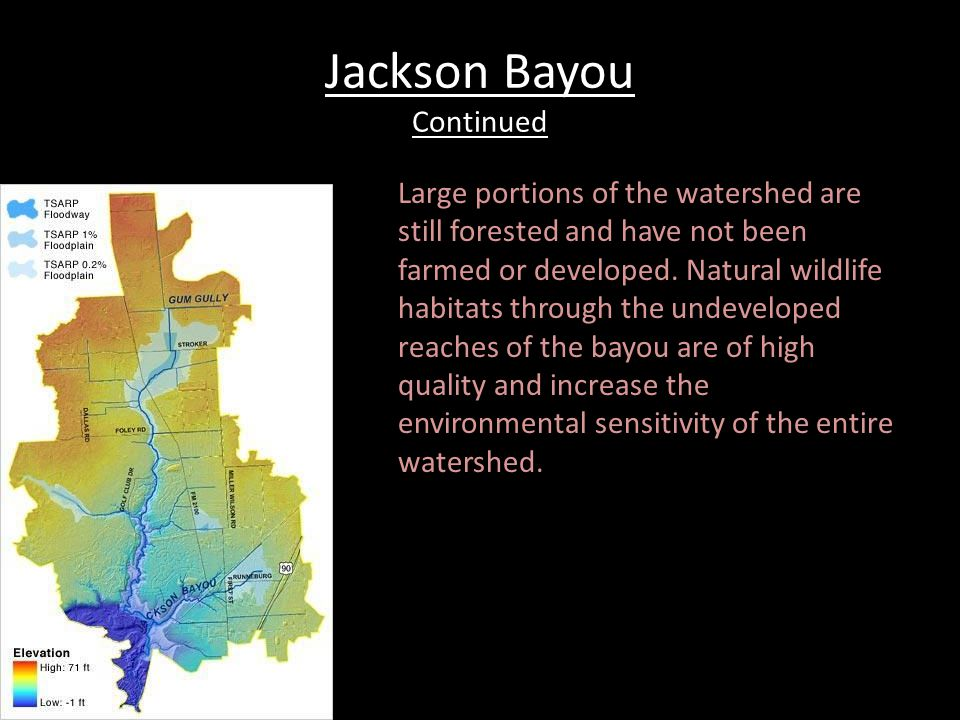 Jackson Bayou Continued Large portions of the watershed are still forested and have not been farmed or developed.