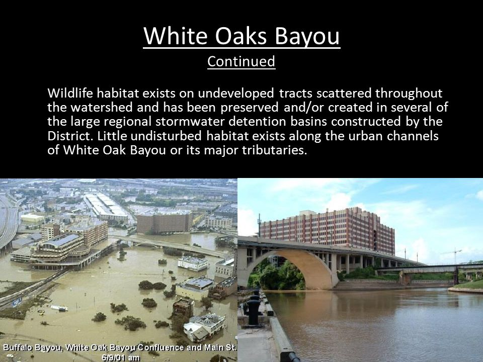 White Oaks Bayou Continued Wildlife habitat exists on undeveloped tracts scattered throughout the watershed and has been preserved and/or created in several of the large regional stormwater detention basins constructed by the District.