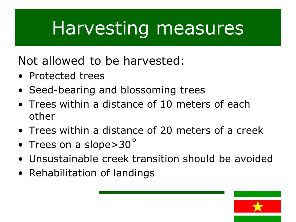Harvesting measures Not allowed to be harvested: Protected trees Seed-bearing and blossoming trees Trees within a distance of 10 meters of each other