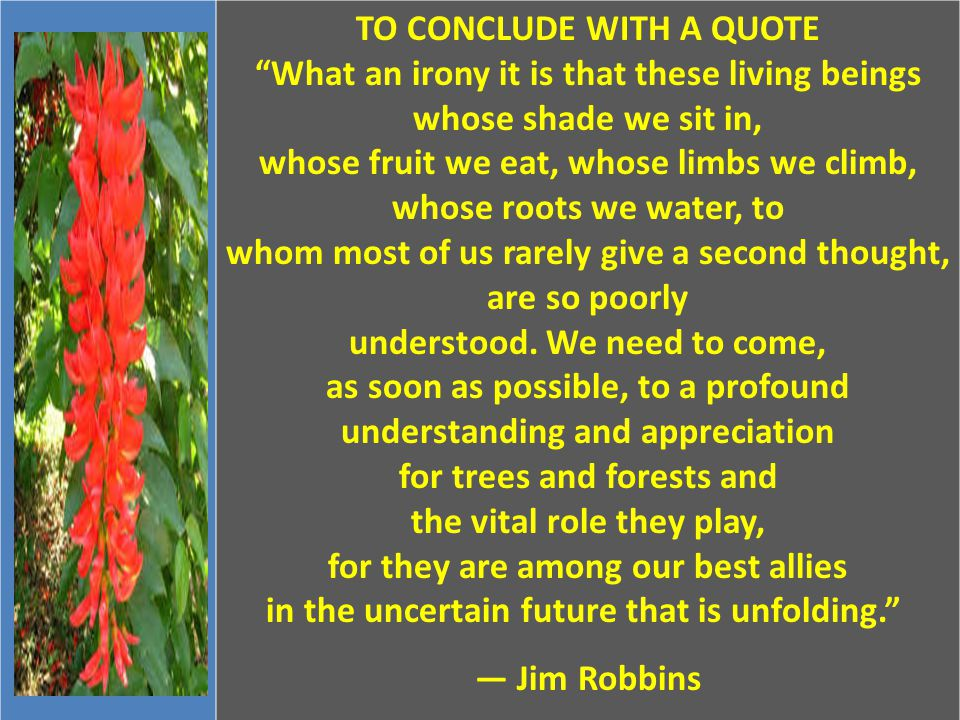 """TO CONCLUDE WITH A QUOTE """"What an irony it is that these living beings whose shade we sit in, whose fruit we eat, whose limbs we climb, whose roots we"""