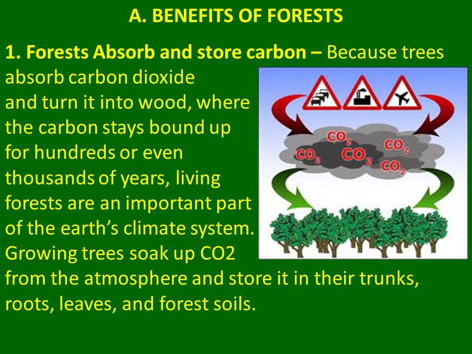 3.Logging and fuel wood Logging does not necessarily cause deforestation.