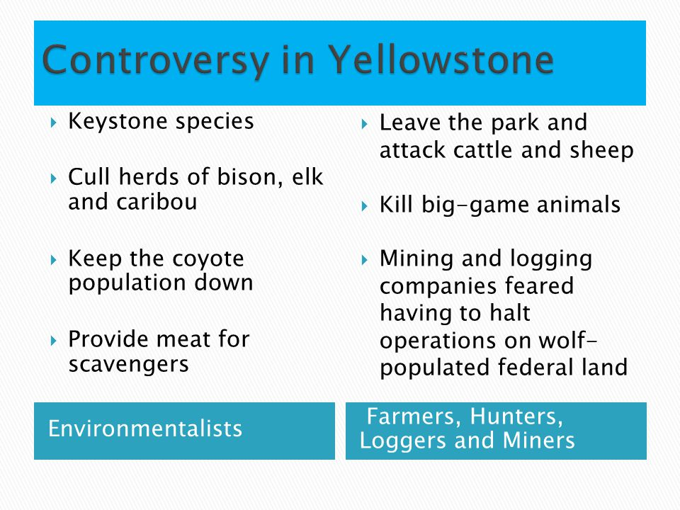 Environmentalists Farmers, Hunters, Loggers and Miners  Keystone species  Cull herds of bison, elk and caribou  Keep the coyote population down  Provide meat for scavengers  Leave the park and attack cattle and sheep  Kill big-game animals  Mining and logging companies feared having to halt operations on wolf- populated federal land