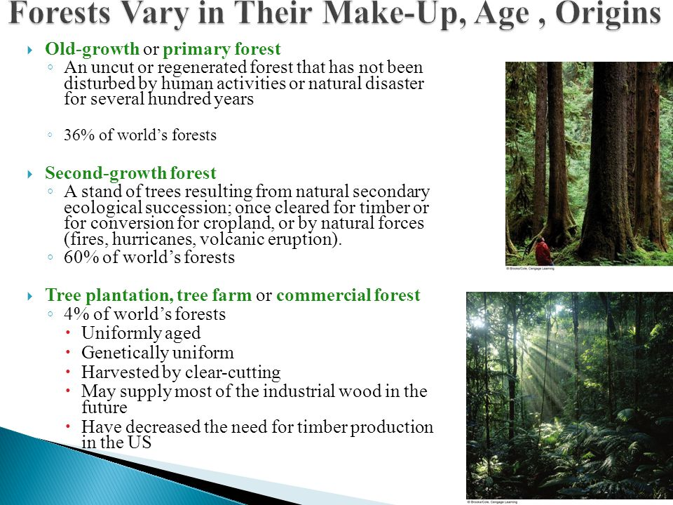  Old-growth or primary forest ◦ An uncut or regenerated forest that has not been disturbed by human activities or natural disaster for several hundre