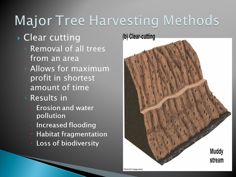  Clear cutting ◦ Removal of all trees from an area ◦ Allows for maximum profit in shortest amount of time ◦ Results in  Erosion and water pollution  Increased flooding  Habitat fragmentation  Loss of biodiversity