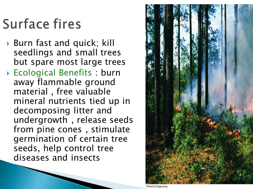  Burn fast and quick; kill seedlings and small trees but spare most large trees  Ecological Benefits : burn away flammable ground material, free val