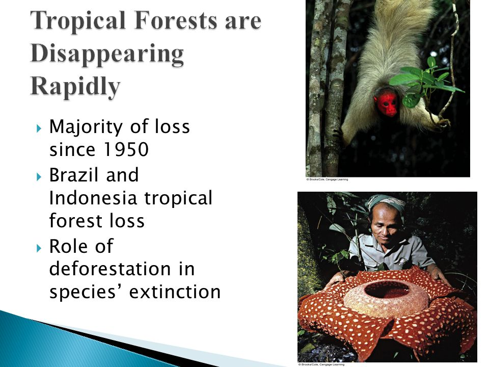  Majority of loss since 1950  Brazil and Indonesia tropical forest loss  Role of deforestation in species' extinction
