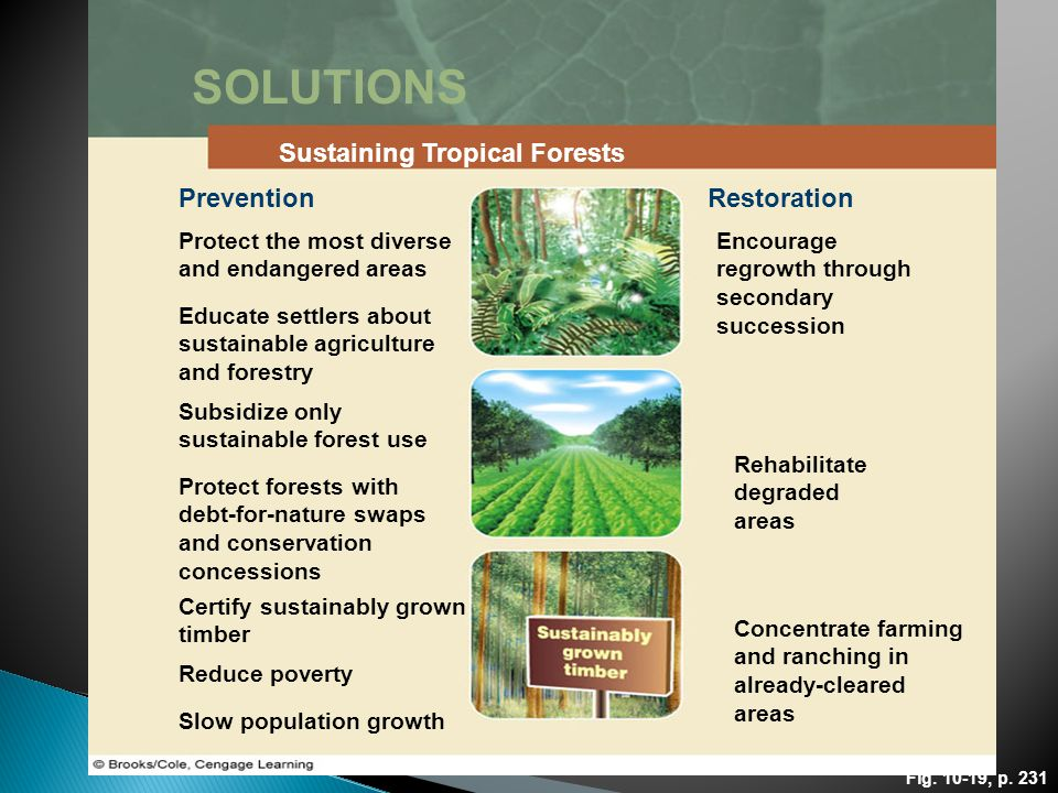 Fig. 10-19, p. 231 SOLUTIONS Sustaining Tropical Forests PreventionRestoration Protect the most diverse and endangered areas Encourage regrowth throug