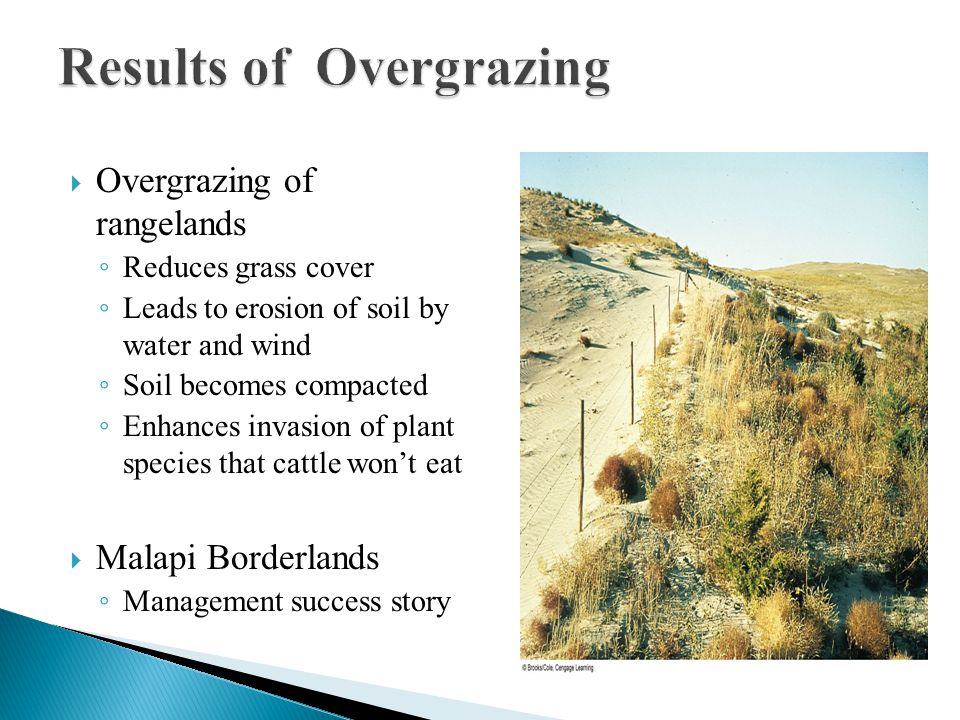  Overgrazing of rangelands ◦ Reduces grass cover ◦ Leads to erosion of soil by water and wind ◦ Soil becomes compacted ◦ Enhances invasion of plant s