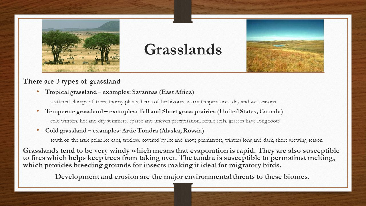 Grasslands There are 3 types of grassland Tropical grassland – examples: Savannas (East Africa) scattered clumps of trees, thorny plants, herds of her