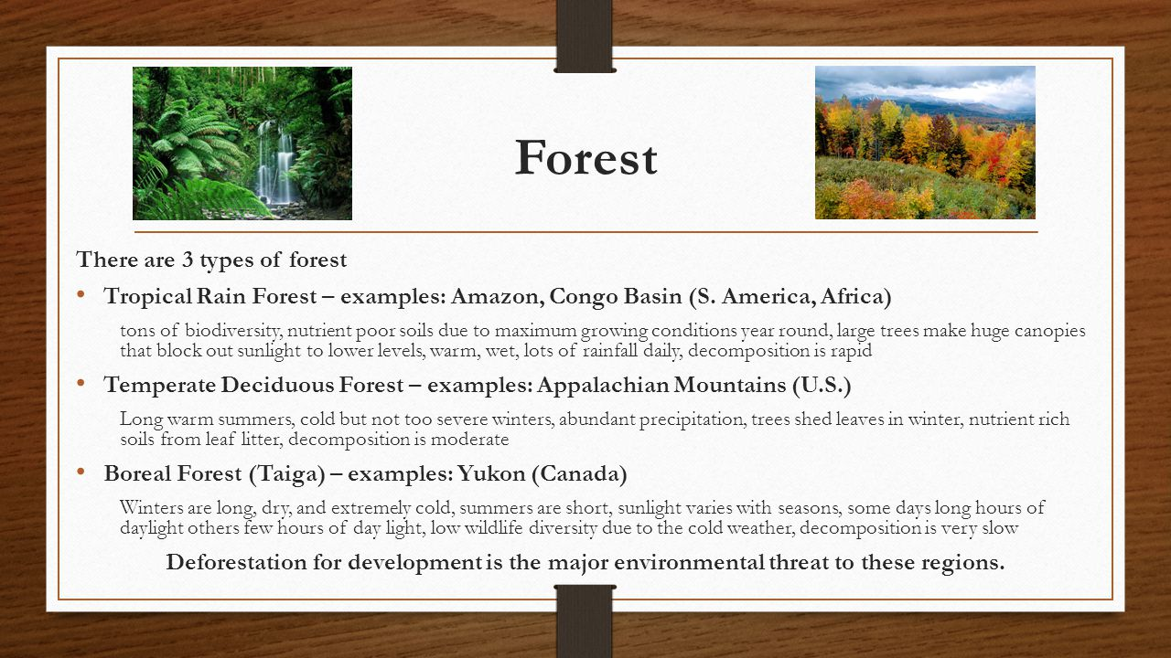 Forest There are 3 types of forest Tropical Rain Forest – examples: Amazon, Congo Basin (S. America, Africa) tons of biodiversity, nutrient poor soils