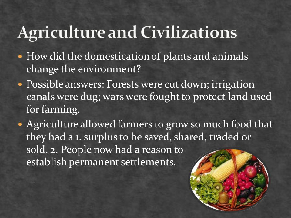 How did the domestication of plants and animals change the environment.