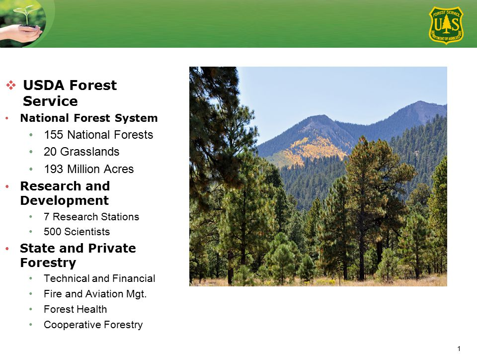 1  USDA Forest Service National Forest System 155 National Forests 20 Grasslands 193 Million Acres Research and Development 7 Research Stations 500 Scientists State and Private Forestry Technical and Financial Fire and Aviation Mgt.