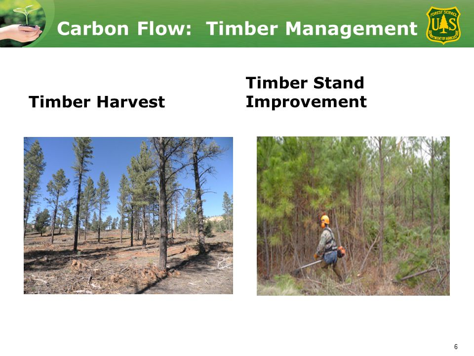 Carbon Flow: Timber Management Timber Harvest Timber Stand Improvement 6