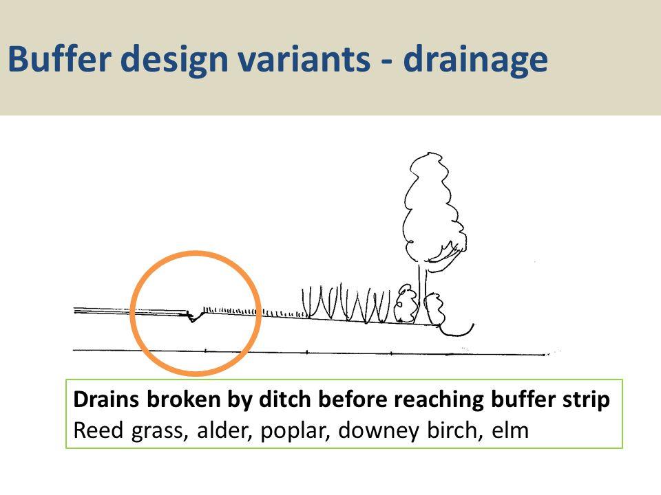 Buffer design variants - drainage Drains broken by ditch before reaching buffer strip Reed grass, alder, poplar, downey birch, elm