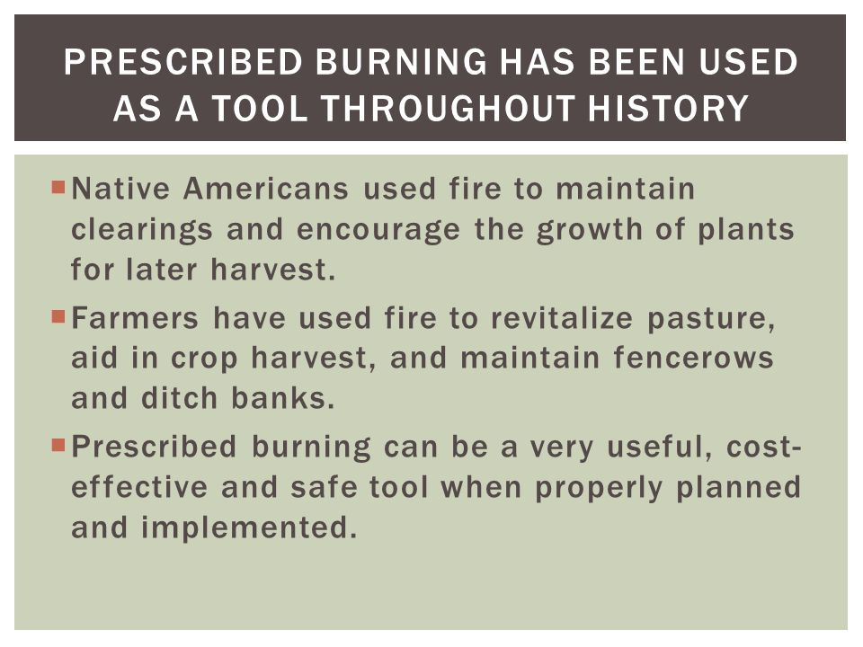  Native Americans used fire to maintain clearings and encourage the growth of plants for later harvest.