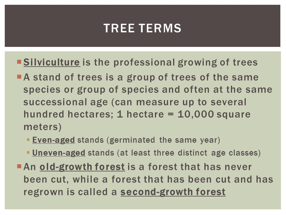  Silviculture is the professional growing of trees  A stand of trees is a group of trees of the same species or group of species and often at the same successional age (can measure up to several hundred hectares; 1 hectare = 10,000 square meters)  Even-aged stands (germinated the same year)  Uneven-aged stands (at least three distinct age classes)  An old-growth forest is a forest that has never been cut, while a forest that has been cut and has regrown is called a second-growth forest TREE TERMS