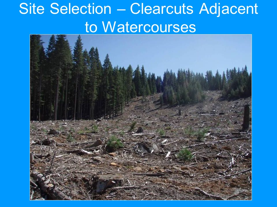 Site Selection – Clearcuts Adjacent to Watercourses