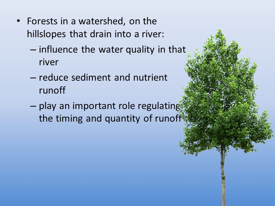 Forests in a watershed, on the hillslopes that drain into a river: – influence the water quality in that river – reduce sediment and nutrient runoff – play an important role regulating the timing and quantity of runoff