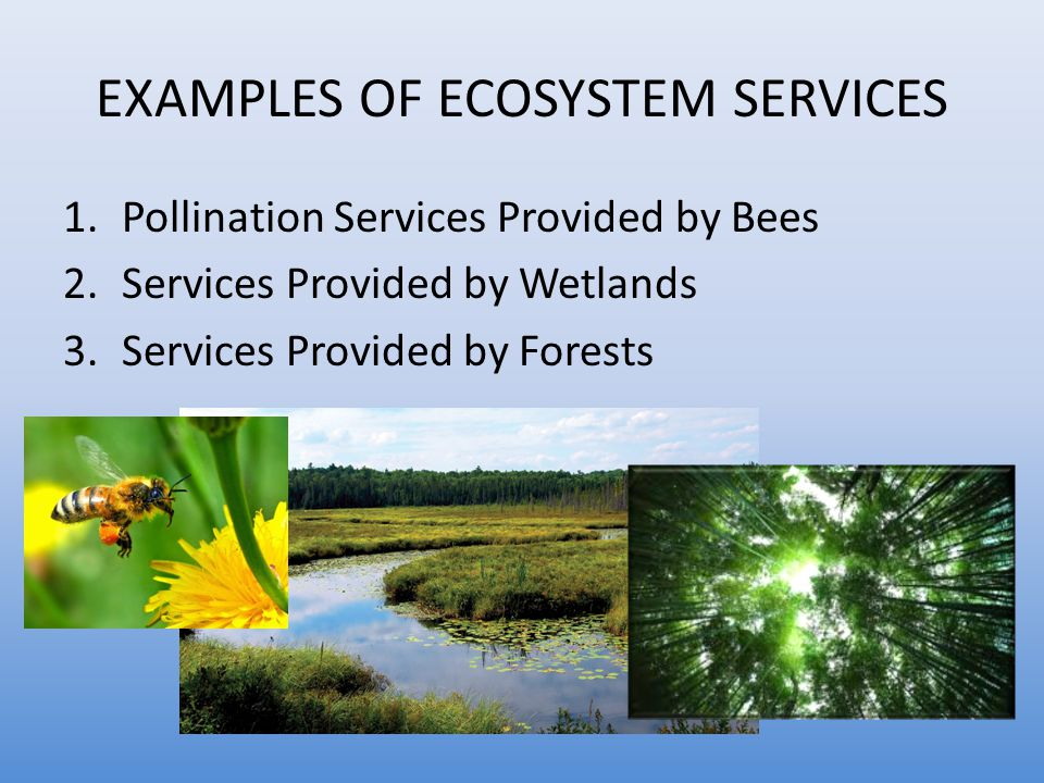 EXAMPLES OF ECOSYSTEM SERVICES 1.Pollination Services Provided by Bees 2.Services Provided by Wetlands 3.Services Provided by Forests