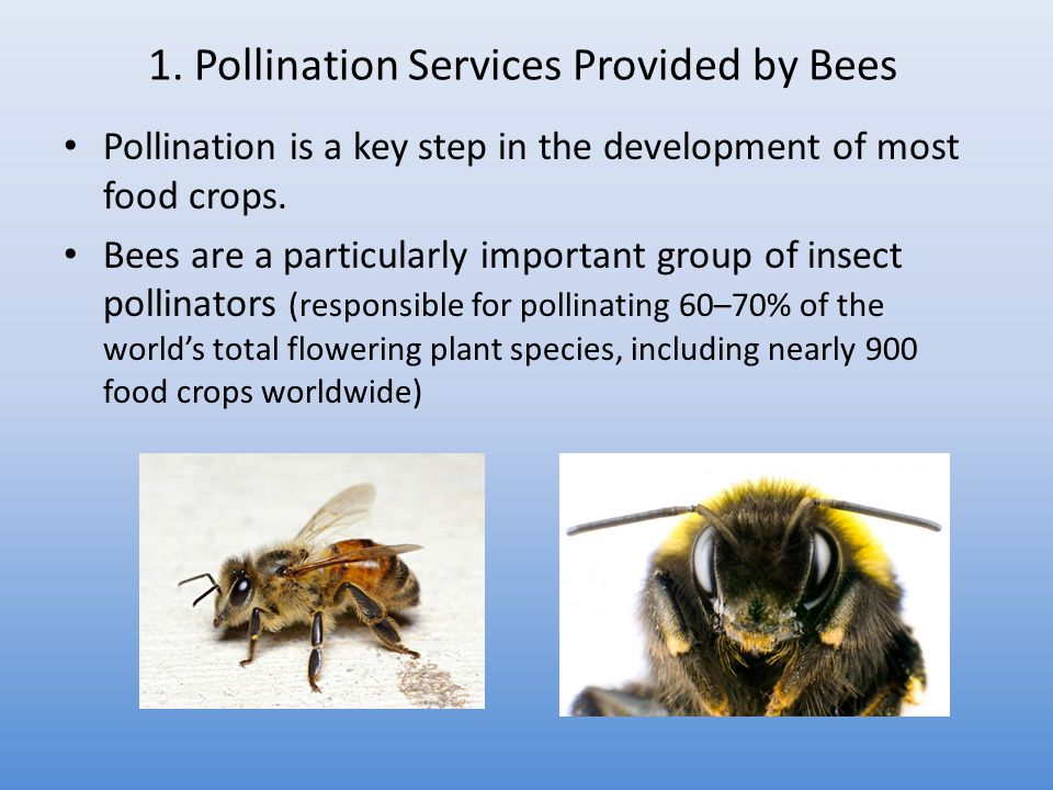 1. Pollination Services Provided by Bees Pollination is a key step in the development of most food crops. Bees are a particularly important group of i