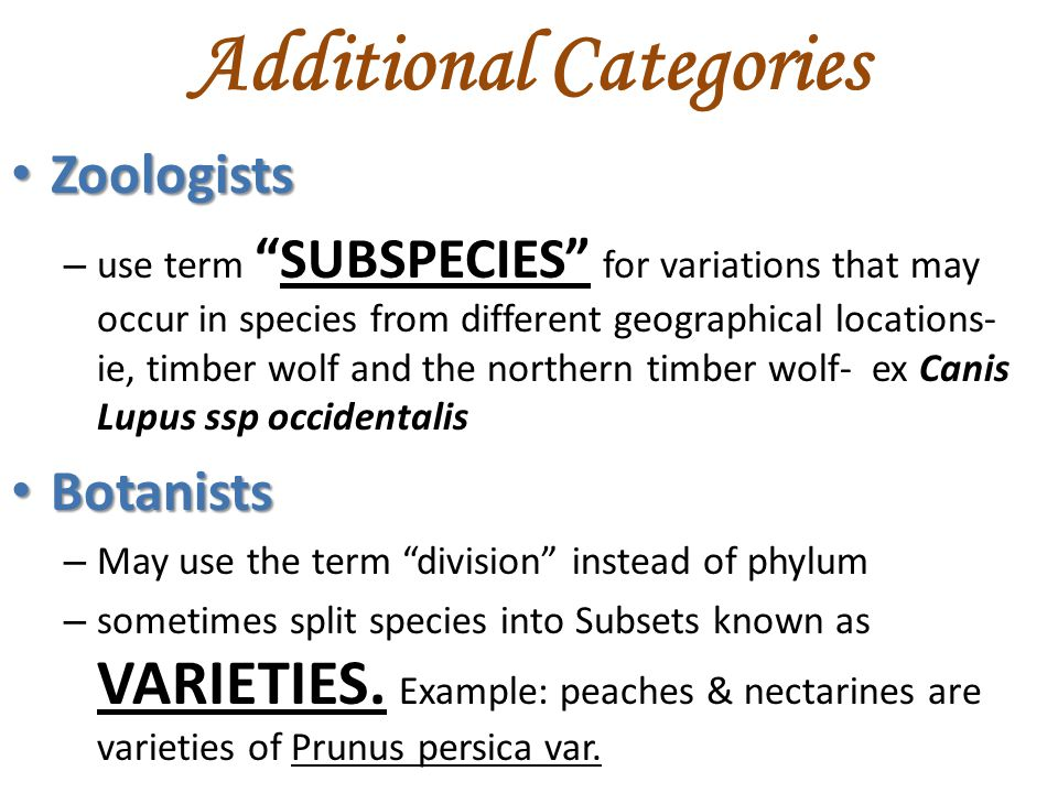 Additional Categories Zoologists Zoologists – use term SUBSPECIES for variations that may occur in species from different geographical locations- ie, timber wolf and the northern timber wolf- ex Canis Lupus ssp occidentalis Botanists Botanists – May use the term division instead of phylum – sometimes split species into Subsets known as VARIETIES.