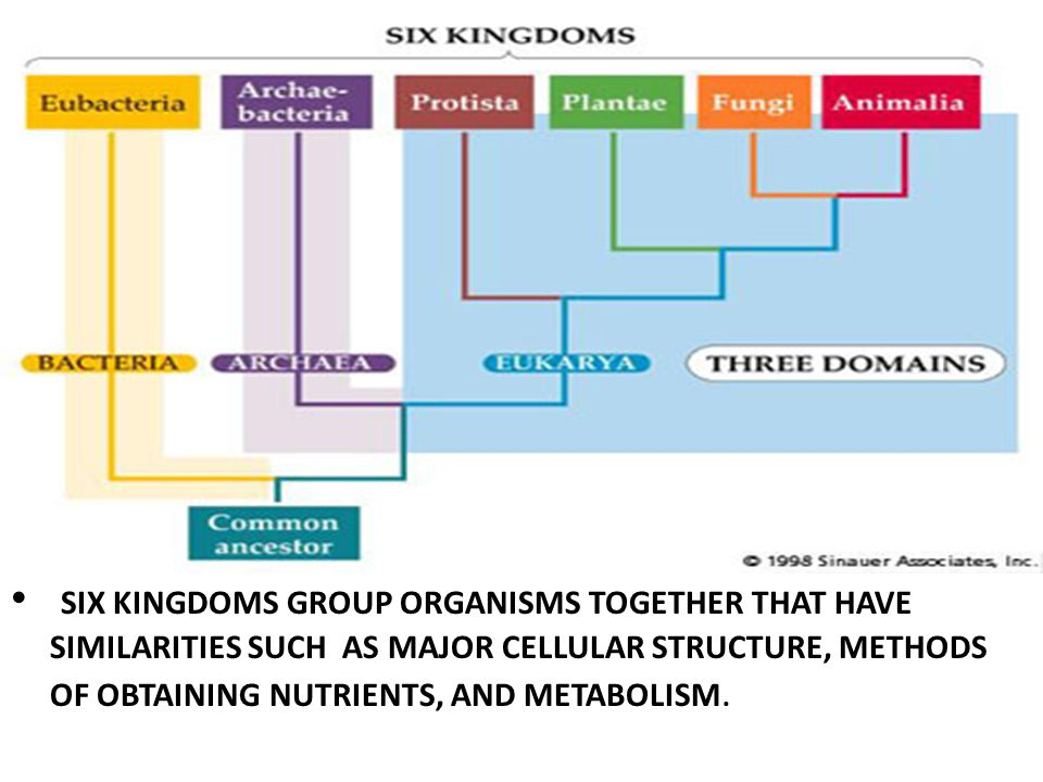 SIX KINGDOMS GROUP ORGANISMS TOGETHER THAT HAVE SIMILARITIES SUCH AS MAJOR CELLULAR STRUCTURE, METHODS OF OBTAINING NUTRIENTS, AND METABOLISM.