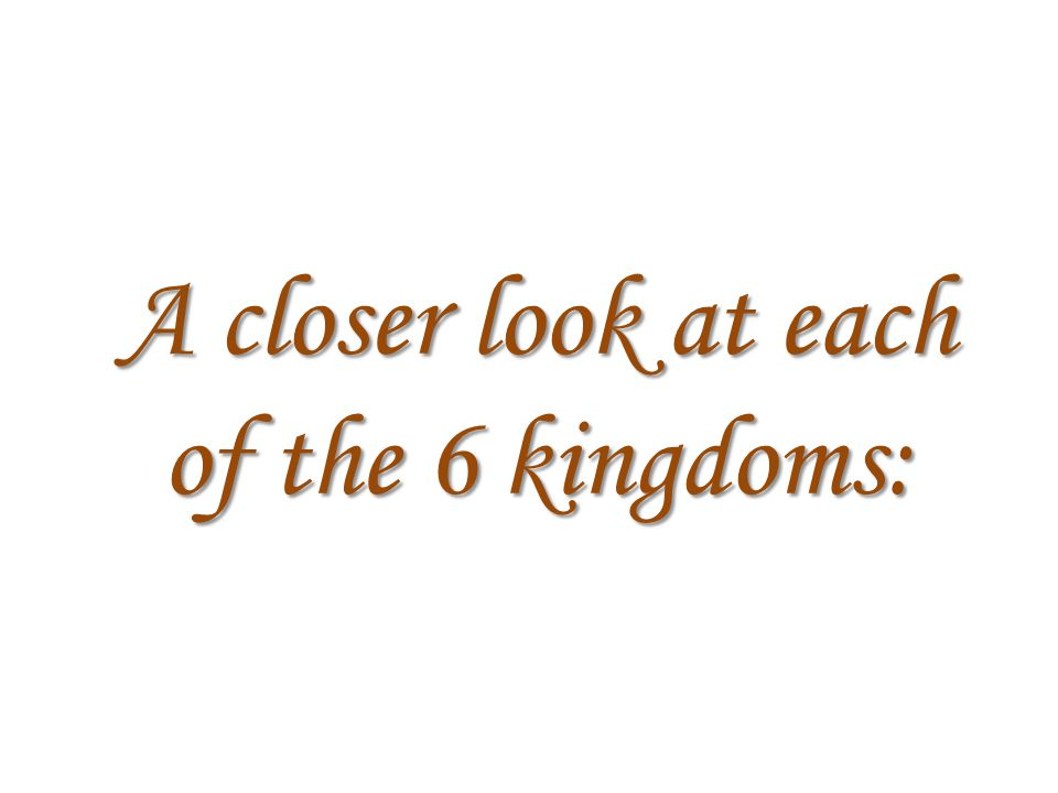 A closer look at each of the 6 kingdoms: