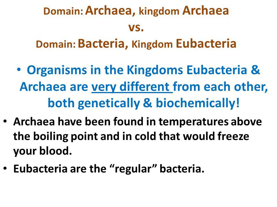 Domain: Archaea, kingdom Archaea vs. Domain: Bacteria, Kingdom Eubacteria Organisms in the Kingdoms Eubacteria & Archaea are very different from each