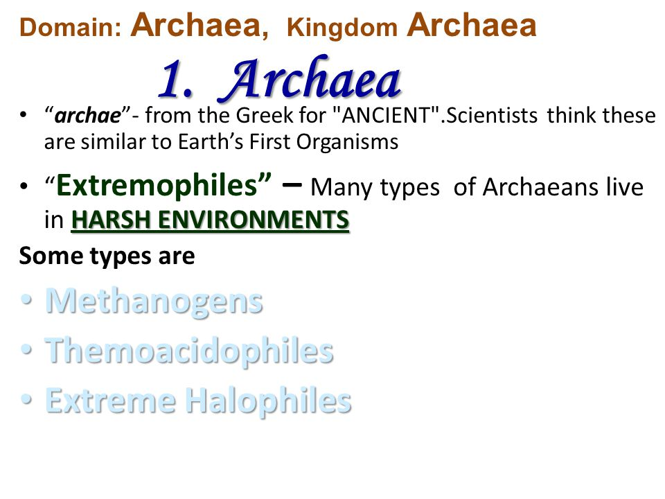 archae - from the Greek for ANCIENT .Scientists think these are similar to Earth's First Organisms HARSH ENVIRONMENTS Extremophiles – Many types of Archaeans live in HARSH ENVIRONMENTS Some types are Methanogens Methanogens Themoacidophiles Themoacidophiles Extreme Halophiles Extreme Halophiles Domain: Archaea, Kingdom Archaea 1.