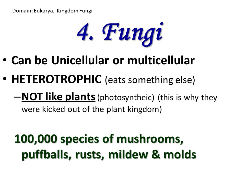 4. Fungi Can be Unicellular or multicellular HETEROTROPHIC (eats something else) – NOT like plants (photosyntheic) (this is why they were kicked out o