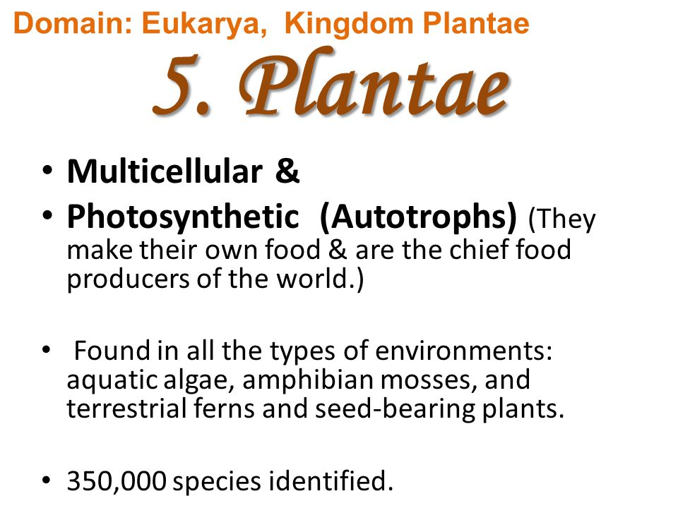 5. Plantae Multicellular & Photosynthetic (Autotrophs) (They make their own food & are the chief food producers of the world.) Found in all the types