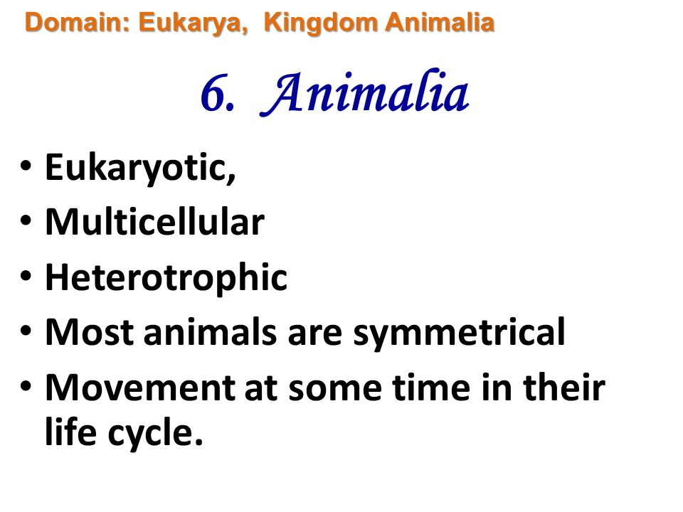 6. Animalia Eukaryotic, Multicellular Heterotrophic Most animals are symmetrical Movement at some time in their life cycle. Domain: Eukarya, Kingdom A