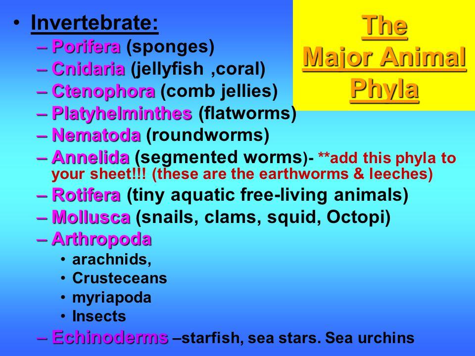 The Major Animal Phyla Invertebrate: –Porifera –Porifera (sponges) –Cnidaria –Cnidaria (jellyfish,coral) –Ctenophora –Ctenophora (comb jellies) –Platyhelminthes –Platyhelminthes (flatworms) –Nematoda –Nematoda (roundworms) –Annelida –Annelida (segmented worms )- **add this phyla to your sheet!!.
