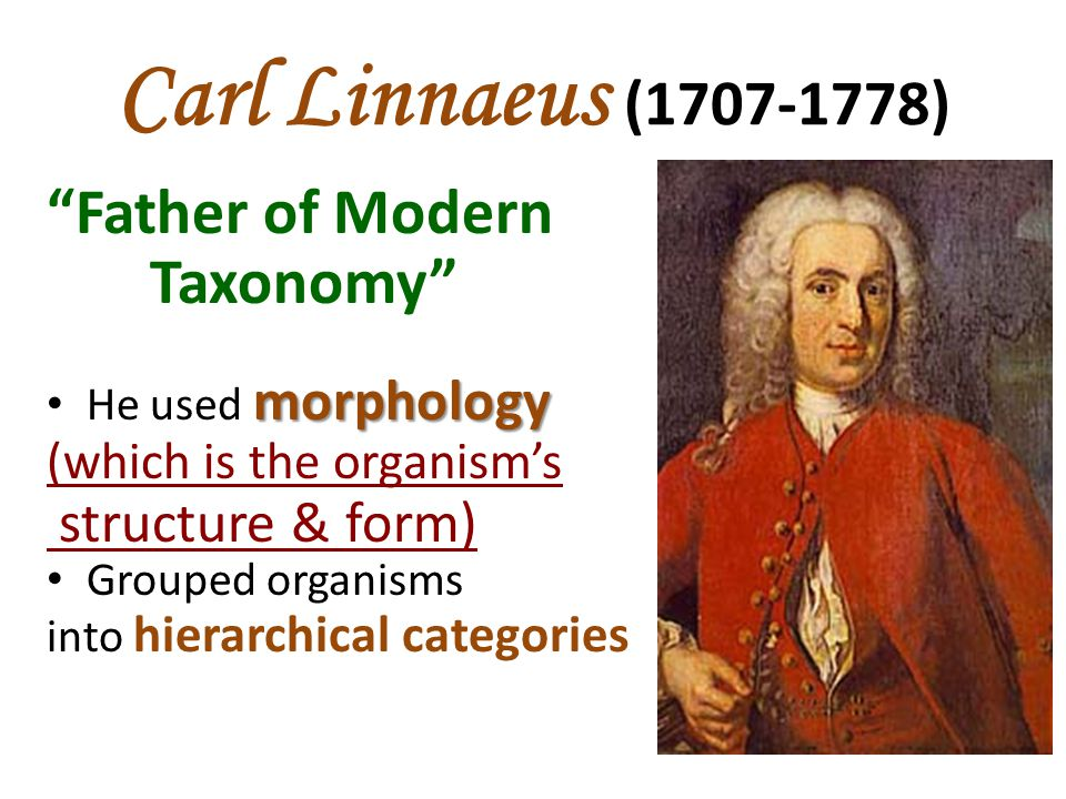 """Carl Linnaeus (1707-1778) """"Father of Modern Taxonomy"""" morphology He used morphology (which is the organism's structure & form) Grouped organisms into"""
