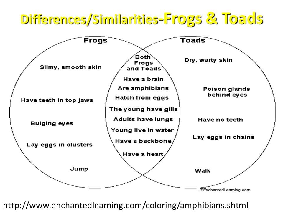 Differences/Similarities -Frogs & Toads http://www.enchantedlearning.com/coloring/amphibians.shtml