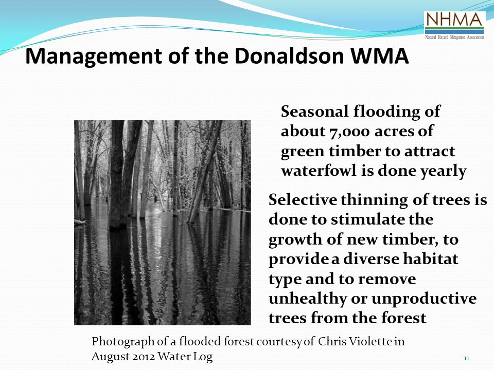 Management of the Donaldson WMA 11 Seasonal flooding of about 7,000 acres of green timber to attract waterfowl is done yearly Selective thinning of trees is done to stimulate the growth of new timber, to provide a diverse habitat type and to remove unhealthy or unproductive trees from the forest Photograph of a flooded forest courtesy of Chris Violette in August 2012 Water Log