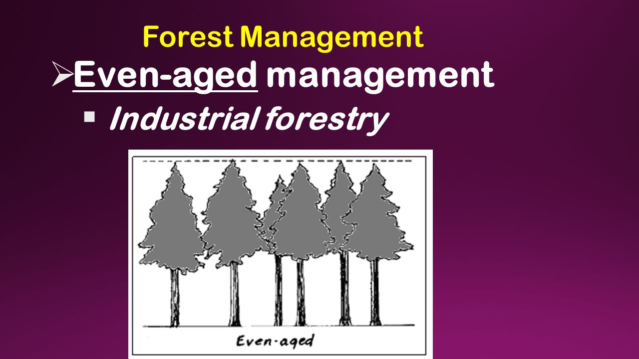 Forest Management  Even-aged management  Industrial forestry