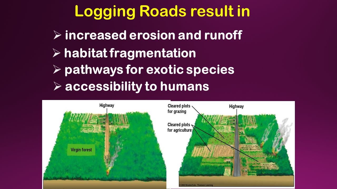 Logging Roads result in  increased erosion and runoff  habitat fragmentation  pathways for exotic species  accessibility to humans