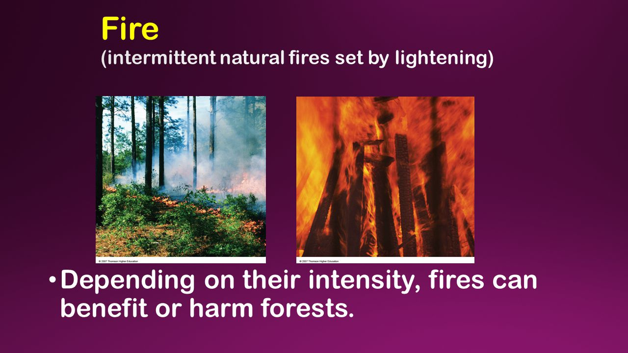 Depending on their intensity, fires can benefit or harm forests.