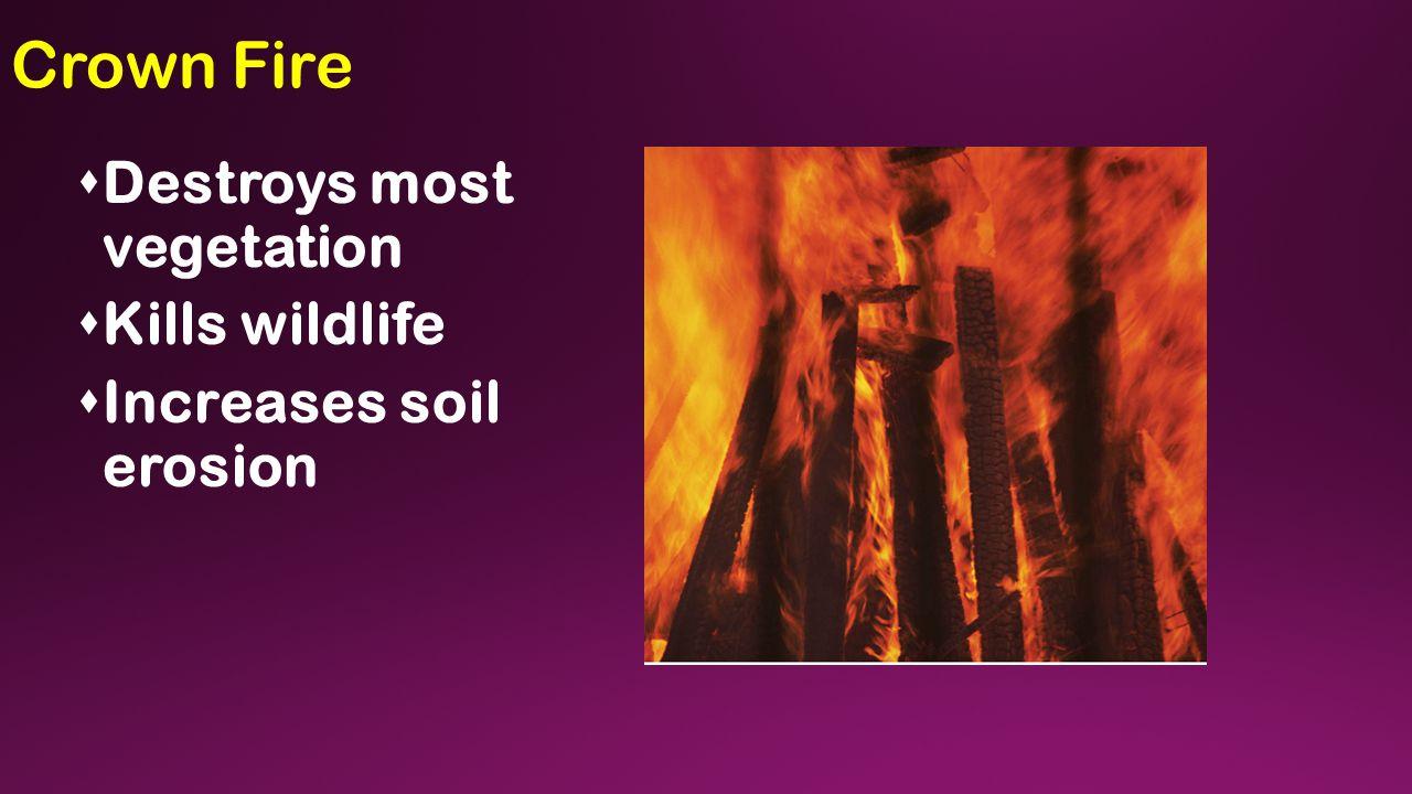 Crown Fire  Destroys most vegetation  Kills wildlife  Increases soil erosion
