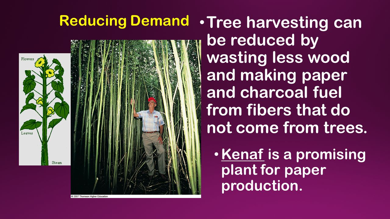 Reducing Demand Tree harvesting can be reduced by wasting less wood and making paper and charcoal fuel from fibers that do not come from trees.