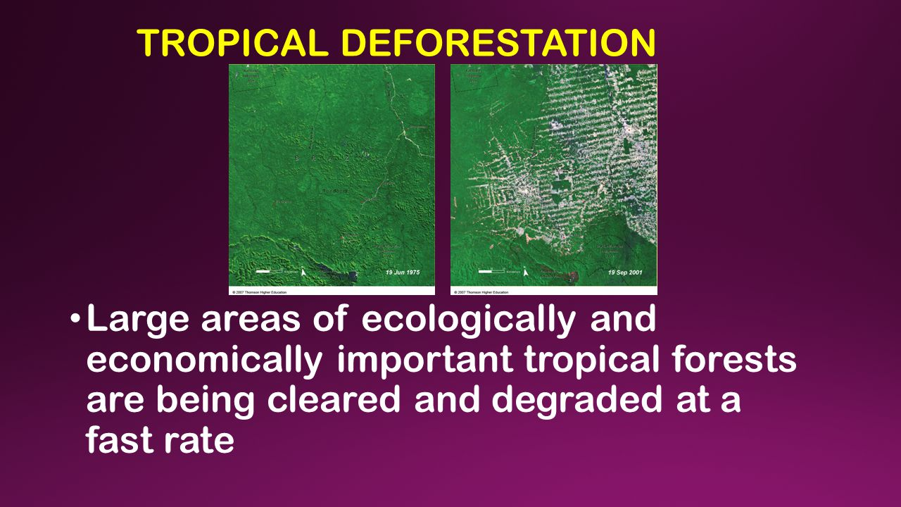 TROPICAL DEFORESTATION Large areas of ecologically and economically important tropical forests are being cleared and degraded at a fast rate