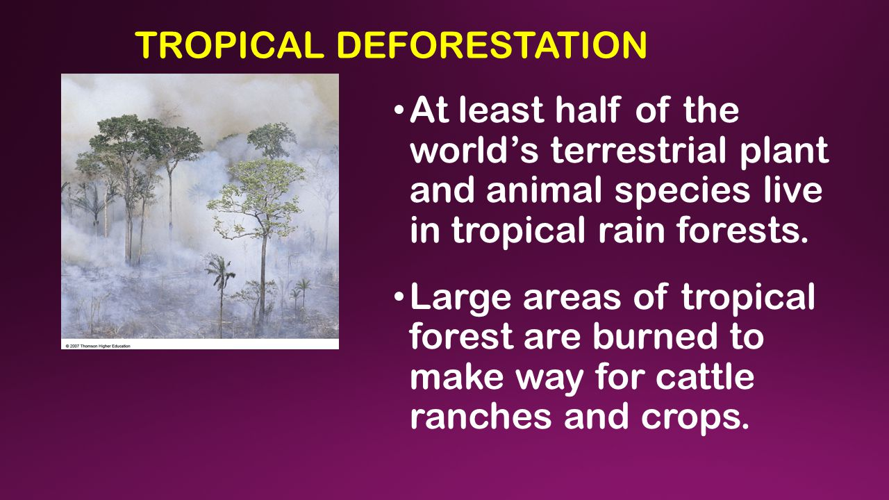 TROPICAL DEFORESTATION At least half of the world's terrestrial plant and animal species live in tropical rain forests. Large areas of tropical forest