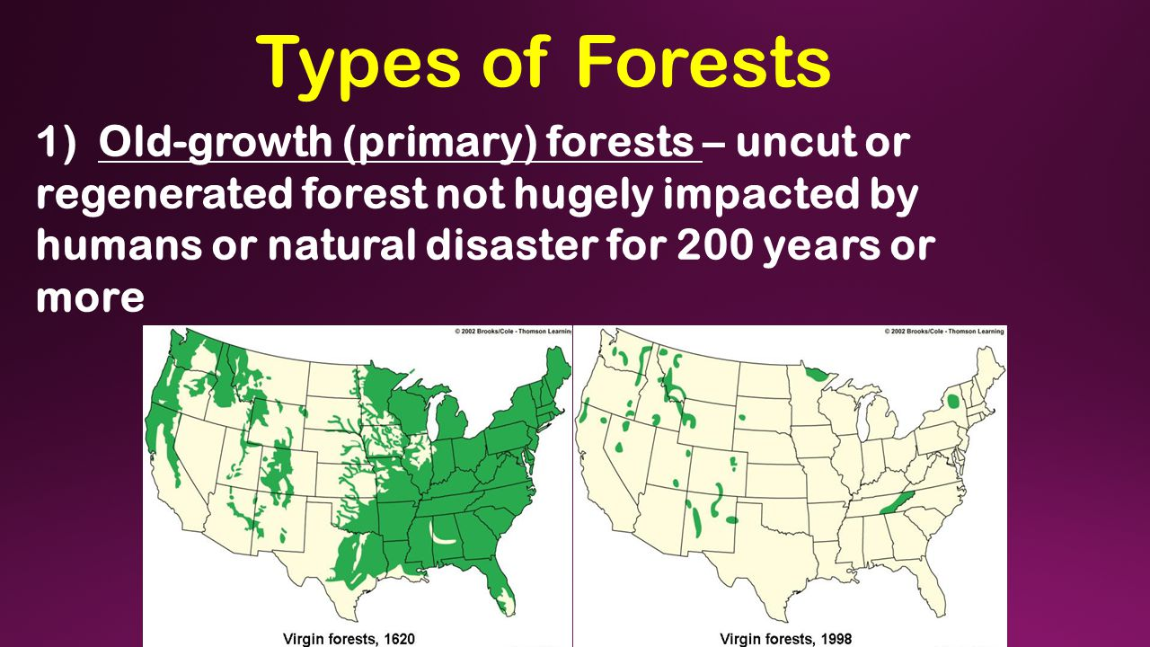 Types of Forests 1) Old-growth (primary) forests – uncut or regenerated forest not hugely impacted by humans or natural disaster for 200 years or more