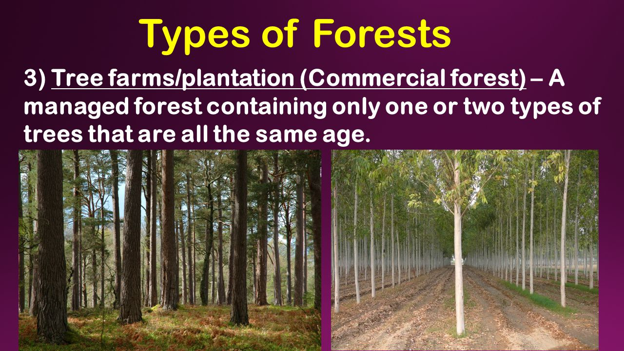 Types of Forests 3) Tree farms/plantation (Commercial forest) – A managed forest containing only one or two types of trees that are all the same age.